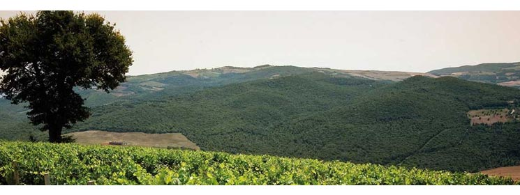 A product image for Montevertine Toscana IGT